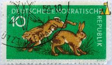 Brown Hares, Deutsche Demokratishe Republik, Germany, stamp, mammal, Stauf, 10, Lepus europaeus, Hase