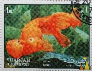 Bubble Eye, Sharjah and Dependencies, Sharjah, UAE, stamp, fish, 1 Rl, Carassius auratus auratus, Air Mail