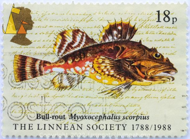Bull-rout, , stamp, fish, 18 p, The Linnean Society, 1788, 1988, Queen Elizabeth II, Myoxocephalus scorpius