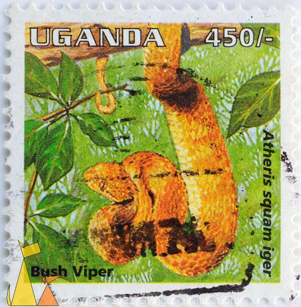 Bush Viper, Uganda, stamp, reptile, snake, 450, Atheris squam iger, Atheris squamigera