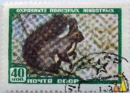 Bushy-tailed Squirrel, CCCP, Russia, stamp, mammal, noyta, 40 Kon, Белка, Sciurus spp