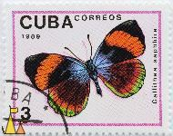 Callithea sapphira, Cuba, stamp, insect, butterfly, Correos, 1989, 3, Callithea saphhira, Callithea sapphira