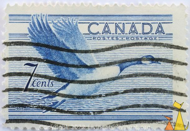 Canada Goose, Canada, stamp, bird, flying, 7 cents, Postage, Postes, 1952, Branta canadensis