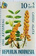 Candle Bush, Republik Indonesia, Indoneisa, stamp, plant, bush, flower, Cassia alata, 10+5 Sen, 1966, Ketepeng, Senna alata