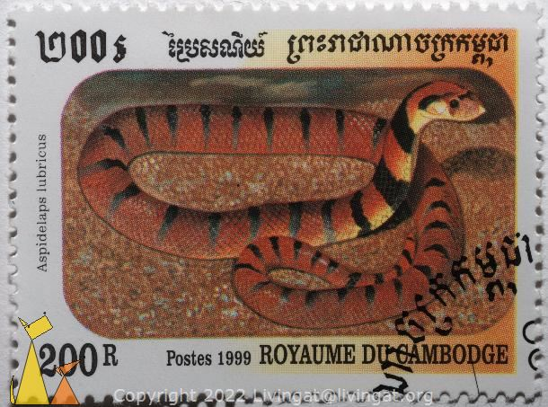 Cape coral snake, Royaume Du Cambodge, Cambodia, stamp, reptile, snake, Aspidelaps lubricus, Cape coral snake, 200R, Postes, 1999, Royaume Du Cambodge