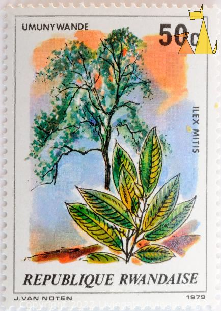 Cape holly, Republique Rwandaise, Rwanda, stamp, plant, tree, J. van Noten, 1979, Uwunywande, 50 c, Ilex mitis
