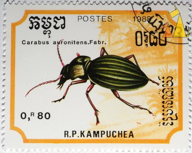 Carabus auronitens, RP Kampuchea, Cambodia, stamp, insect, 0.80 R, Postes, 1988, Carabus auronitens, Carabus auronitens.Fabr.