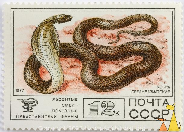 Central Asian Cobra, CCCP, Russia, stamp, reptile, snake, noyta, 1977, 12 K, среднеазиатская кобра, Naja oxiana