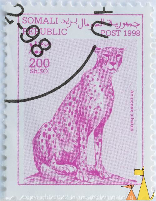 Cheetah in Pink, Somali Republic, Somalia, stamp, mammal, cat, 200 Sh.SO, Post, 1998, Acinonyx jubatus