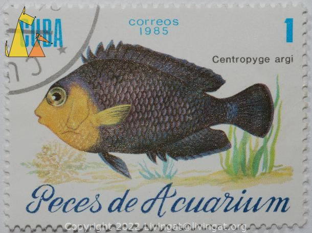 Cherubfish Angelfish, Cuba, stamp, fish, underwater, correos, 1985, 1, Peces de Acuarium, Centropyge argi