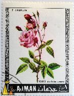 China rose, Ajman, UAE, stamp, plant, flower, rose, 1 Rl, Postages, Rosier des indes commun, Rosa chinensis var. chinensis