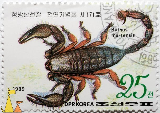 Chinese scorpion, DPR Korea, North Korea, stamp, reptile, scorpion, Mesobuthus martensii, Buthus martensis, 1989, Chinese scorpion, 25