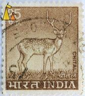 Chital Stag, India, stamp, mammal, 25, Axis axis