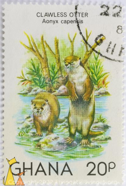 Clawless Otter, Ghana, stamp, mammal, 20 p, Aonyx capensis
