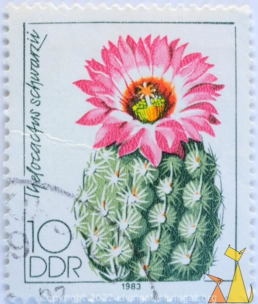 Clory og Texas, DDR, Germany, stamp, plant, flower, 10, Thelocactus schwarzii, Thelocactus bicolor