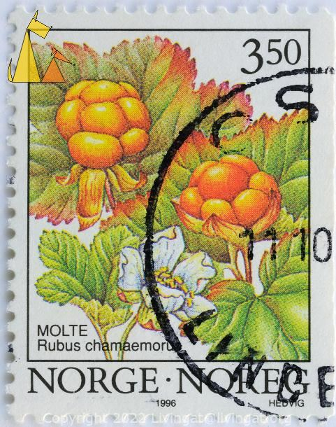 Cloudberry Berries, Norge, Noreg, Norway, stamp, Molte, 3.50, Hedvig, Rubus chamaemorus, 1996