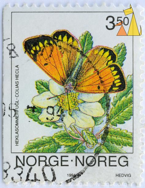 Clouded Yellow on Mountain avens, Norge, Noreg, Norway, stamp, flower, insect, butterfly, Hedvig, 1994, 3.50, Heklasommerflugl, Colias hecla, Dryas octopetala