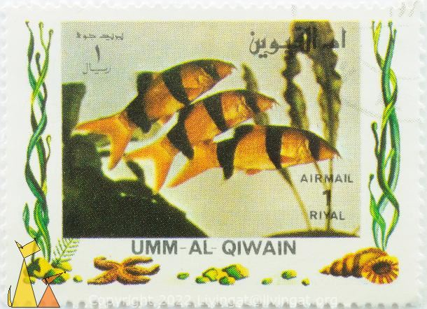 Clown Loach, Umm al Qiwain, Umm al Quwain, UAE, stamp, fish, Air Mail, 1 Riyal, Chromobotia macracanthus