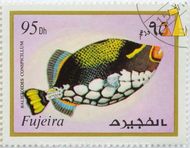 Clown Trigger Swimming Up, Fujeira, Fujairah, stamp, fish, Postage, gold frame, 95 Dh, Balistoides conspicillum