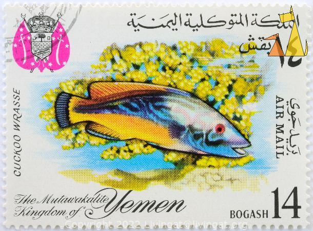 Cockoo Wrasse, The Mutawakalite Kingdom of Yemen, Yemen, stamp, coat of arms, fish, 14 Bogashi, Air Mail, Labrus mixtus