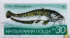 Com, Wels Catfish, Bulgaria, stamp, fish, 1983, 30 cm, nowa, blue, Silurus glanis