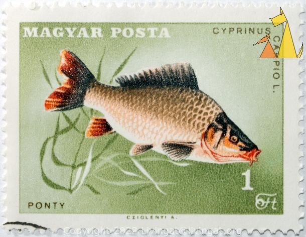 Common Carp, Magyar, Hungary, stamp, fish, 1 Ft, Posta, Cziglenyi A, Ponty, Cyprinus carpiol, Cyprinus carpiol L, Cyprinus carpio