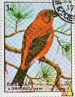 Common Crossbill, Sharjah and Dependencies, Sharjah, UAE, stamp, bird, Loxia curvirostra, 1 Rl, Air Mail