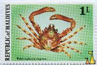 Common Decorator Crab, Republic of Maldives, Maldives, stamp, crab, 1 L, Schizophrys aspera