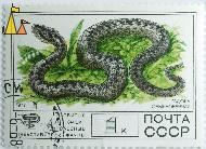 Common European adder, CCCP, Russia, stamp, reptile, snake, Vipera berus, Common European adder, Обыкновенная гадюка, 1977, 1 K
