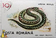 Common European adder, Romana, Romania, stamp, reptile, snake, Vipera berus, Common European Adder, Posta, 1993, Aida Tasgian Philipovichi, 10L