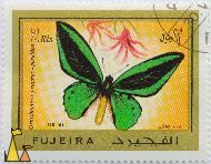 Common Green Birdwing, Fujeira, Fujairah, stamp, insect, butterfly, Air Mail, 2 Rls, poseidon, Ornithoptera priamus
