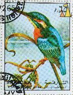 Common Kingfisher, Sharjah and Dependencies, Sharjah, UAE, stamp, bird, Alcedo atthis, 65 Dh, Air Mail