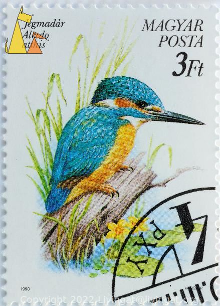 Common Kingfisher by the water, Magyar, Hungary, stamp, bird, 1990, Varga P, Posta, 3 Ft, Alcedo atthis, Jegmadar