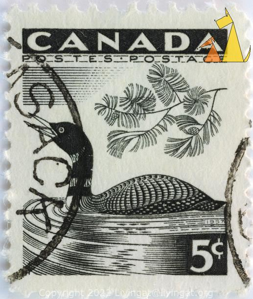 Common Loon, Canada, stamp, bird, duck, 5 c, Postes, Postage, Gavia immer, Black and White, 1957