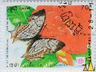 Common Map, Etat du Cambodge, Cambodia, stamp, insect, butterfly, Postes, 1991, Philanippon'91, 70 R, Cyrestis thyodamas