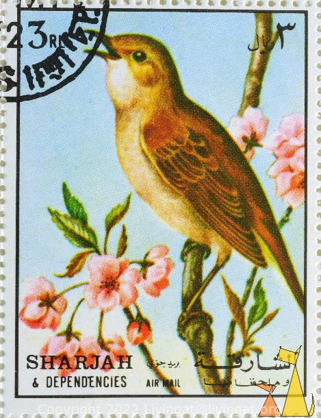 Common Nightingale, Sharjah and Dependencies, Sharjah, UAE, stamp, bird, Luscinia megarhynchos, 3 Rl, Air Mail