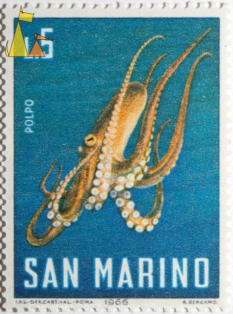 Common Octopus, Polpo, San Marino, stamp, fish, Polpo, 1966, L.5, Octopus vulgaris