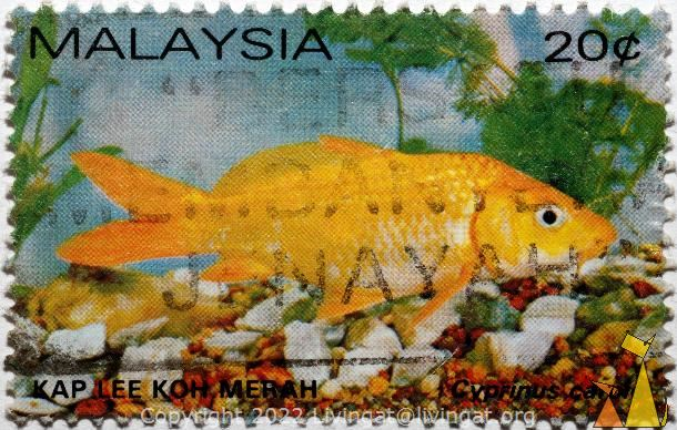 Common carp, Malaysia, stamp, fish, 20 c, Kap Lee Koh Merah, Cyprinus carpie, Cyprinus carpio