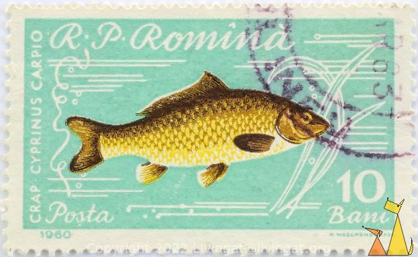Common carp, RP Romania, Romania, stamp, fish, Carp, Cyprinus carpio, Posta, 1960, 10 Bani