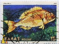 Common dentex, Hellas, Greece, stamp, fish, 15, 1981, Dentex dentex