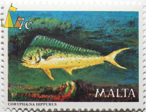 Common dolphinfish, Malta, stamp, fish, 7 c, Coryphaena hippurus