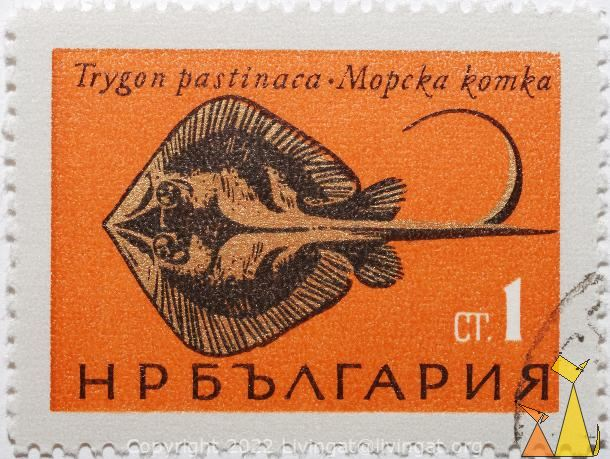 Common stingray, Bulgaria, stamp, fish, ray, 1 Ct, Trygon pastinaca, Dasyatis pastinaca, Mopcka komka