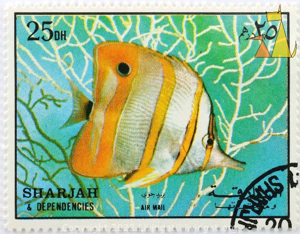 Copper-banded Butterflyfish, Sharjah and Dependencies, Sharjah, stamp, fish, air mail, 25 Dh, Chelmon rostratus