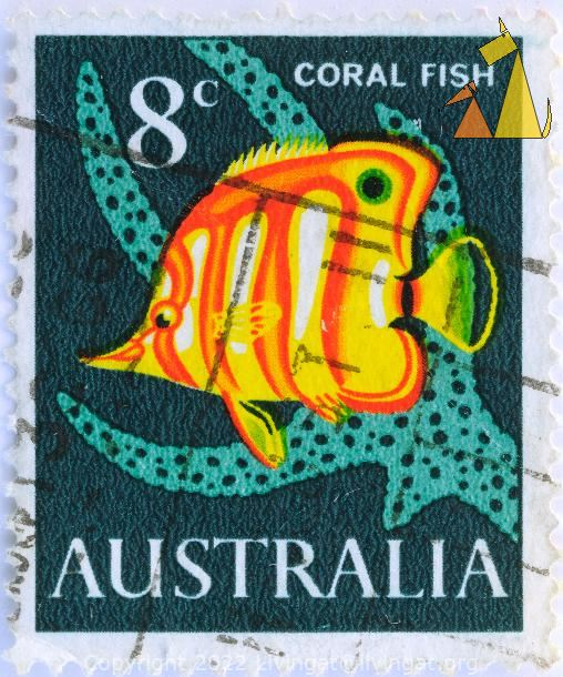 Copperband butterflyfish, Australia, stamp, fish, 8 c, coral fish, Chelmon rostratus