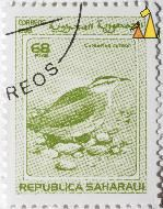 Cream-coloured Courser, Republica Saharaui, Sahrawi Arab Democratic Republic, stamp, bird, Cursorius cursor, 68 PTAS, 1998, Correos