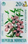 Crested Philippine violet, Republik Indonesia, Indonesia, stamp, plant, flower, 20+5 Sen, 1966, Djarong, Barleria cristata