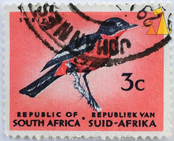 Crimson-breasted Gonolek, Republik van Suid-Afrika, Republic of South Africa, South Africa, stamp, bird, postgeld, postage, 3 C, Shrike, johannesburg, Red