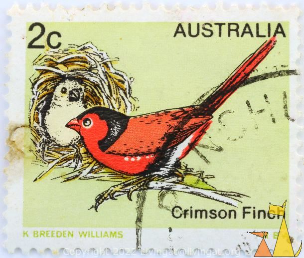 Crimson finch, Australia, stamp, 2 c, bird, K Breeden Williams, Neochmia phaeton
