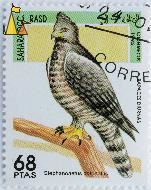 Crowned Eagle, Sahara OCC RASD, Western Sahara, stamp, bird, 68 Ptas, Correos, 1995, bird of prey, Rapaces Diurnas, Stephanoaetus coronatus