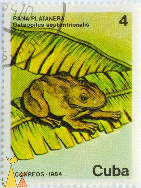 Cuban Tree Frog, Cuba, stamp, reptile, frog, correos, 1984, 4, rana platanera, Osteopilus septentrionalis